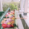 意外と季節が感じられる場所!手水のダリアに癒された伊和志津神社