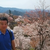 コロナで緊急事態宣言/吉野の桜