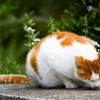 ネコさんが自慢しに来たら、褒めてなでてあげると喜ぶようです