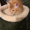 猫がホットカーペットで誘ってます!