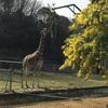東山動物園*タヌキ以外