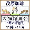 6月20日(日) 千葉 茂原珈琲店内で、犬猫譲渡会が開催されます