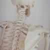骨の歪みを調整し自然な体勢へ。