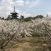 和楽な日々。。そうだ!京都に行こう!!妙心寺編