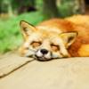 健康な生活に最適な『睡眠時間』は?【疲れ、寝過ぎ、寝だめ、質、時間帯、メラトニン、脳】