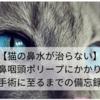 【猫の鼻水が治らない】鼻咽頭ポリープにかかり手術に至るまでの備忘録