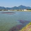 幡水池(兵庫県加古川)