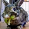 美味しい野菜にルンルン明桜(あさ)です。