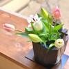 春一番  庭の茶花とお濃茶点前