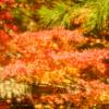 紅葉を見に三渓園へ