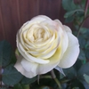 朝露に濡れる花たち