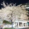 新歓と名古屋駅周辺の風景