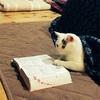 可愛い猫の写真をいただいた☆