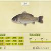 【あつ森】「ブラックバス(魚)」の出現時期・場所・時間帯情報まとめ【あつまれどうぶつの森】