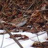 ルミックス FZ-85で、沢山の野鳥を撮影!