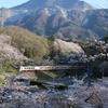 桜×武甲山×クラシック