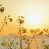 本州最西端、毘沙ノ鼻から夕陽を…