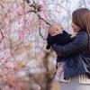 RSKバラ公園  梅の撮影