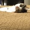 愛猫のふとした仕草に癒される。