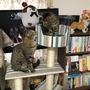 【ペッツワン】カインズのキャットタワーを導入しました【猫】