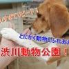 楽しすぎてリピート!とにかく動物とふれあえる!渋川動物公園!