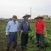 丸三のさつま芋畑2016(草引き2)