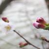 ◆花の時期、早まるかなぁ?