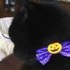 黒猫りぃちゃんは  乳児雪ちゃんの乳母です