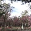 みどりの日 札幌 円山公園 行ってみた 5月4日(月)2020