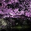 千鳥ヶ淵の桜の素晴らしさよ