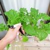 水耕栽培で使う農薬について。私の場合は害虫対策が必要です