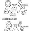 『規範フィルター論:日本消費者行動のメカニズム』