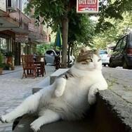 世界中に拡散され、多くの人々の心に潤いと癒しをもたらした猫