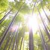 【報国寺】真夏の鎌倉は暑いけど涼しい!?日本を感じるお寺巡り!
