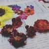 赤いバラは乾燥すると黒くなるのはなぜ?