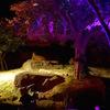 天王寺動物園の夏祭り!ナイトZOOに行ってきたよ。
