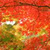 【グルメ】福岡育ちが選ぶ京都のおいしいラーメン5選