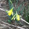春の訪れと不法侵入対策