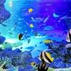 人魚に会いに【サンシャイン水族館】トワイライトラグーンに行ったけど…