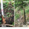 【北向き裏庭の庭づくり⑤】竹の驚異的な成長速度と恐ろしい竹害