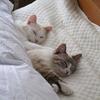 小2女子のひとり寝事情。ベッドが狭いから、そろそろ一人で寝てほしい<母の心の叫び>