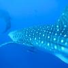 【沖縄本島】ジンベエザメと泳ぎ食い倒れる2泊3日旅行記