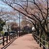 春うらら/ハーフマラソンランキング