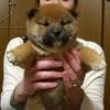 うちの前に捨てられた子犬。里親さがしに奔走し、素晴らしい里親さんに出会いました。