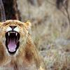 みんな怒ってない?健康の為に「怒り」は早めに手放すことをおススメ!「怒り、憎しみ」は体内に毒素を作る!