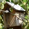 四十雀の巣立ち‼