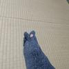 靴下で親指外側がよく破れる その原因と対処法とは