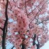 春とフラワーエッセンス
