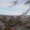 秋田市千秋公園の満開間近な桜たちと筋肉痛