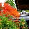 奈良市円成寺に行って来ました。